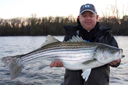 Striper fishing in the housatonic river for Bass fishing in ct