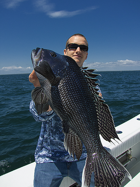 Sea bass fishing for Martha s vineyard fishing charters
